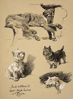 Pastel Pet Portrait Drawing - Irish Wolfhound, West Highlander by Cecil Charles Windsor Aldin