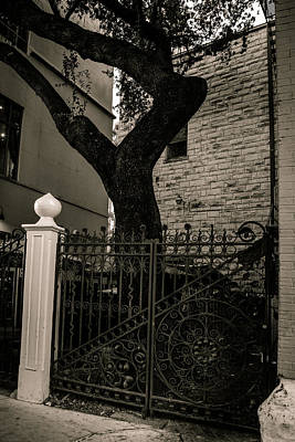 Photograph - Iron And Bark by Melinda Ledsome