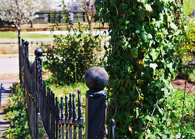 Photograph - Iron Fence by Lynnette Johns