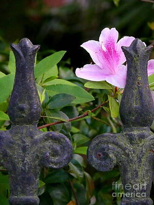 Photograph - Iron Fence With Azalea by Jeanne  Woods