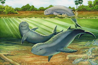 Painting - Irrawaddy Or Mekong River Dolphin by Tammy Yee