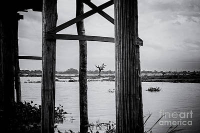 Photograph - Irrawaddy River Tree by Dean Harte