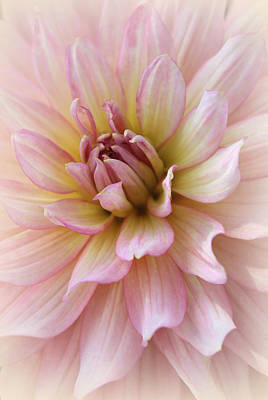 Soft Photograph - Irresistible Beauty by The Art Of Marilyn Ridoutt-Greene