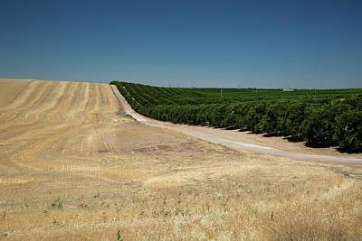 Green. 2012 Photograph - Irrigated Orchard by Jim West