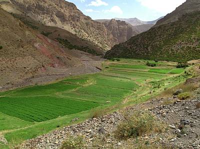 Irrigated Valley In Morocco Art Print