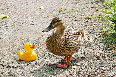 Is Everything Ducky? Art Print by Peggy Collins