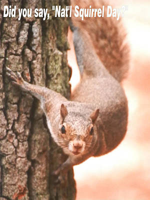Photograph - Is It National Squirrel Day by Belinda Lee