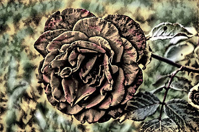 Photograph - Is Still A Rose 1 by David Yocum