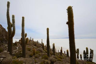 Photograph - Isla Incahuasi Salar De Uyuni Bolivia 1 by Bob Christopher