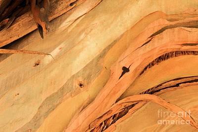 Photograph - Island Bark by Adam Jewell