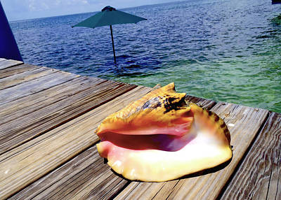 Turks And Caicos Islands Photograph - Island Conch by Carey Chen