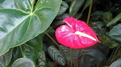 Photograph - Island Flower by Anita Burgermeister