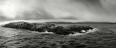 Sea And Sky Photograph - Island Of Arctic Birds And Sea Lions by Panoramic Images