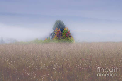 Art Print featuring the photograph Island Of Color In Sea Of Fog by Dan Friend