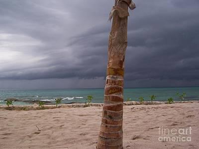 Island Paradise Print by AK Photography