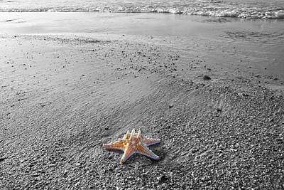 Island Star Original by Betsy Knapp