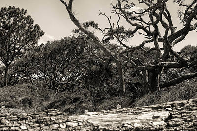 Island Trees Art Print