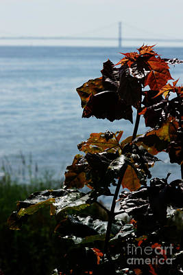 Photograph - Island View by Linda Shafer