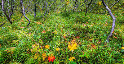 Tree Photograph - Islandic Forest by Alexey Stiop