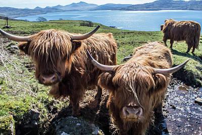 Yak Wall Art - Photograph - Isle Of Mull, Scotland by Vwb Photos