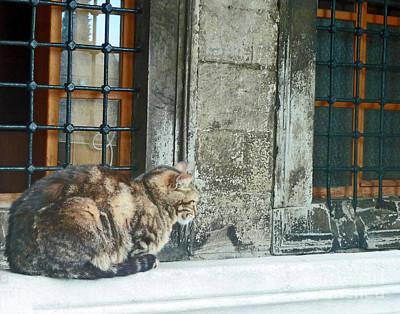 Istanbul Cat Art Print