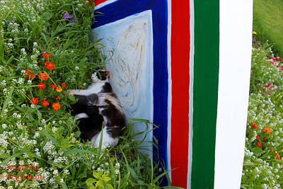 Photograph - Cat Near Flowery Galaxy by Augusta Stylianou
