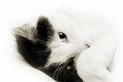 Andee Design Cats Photograph - It Is Hard To Be So Cute by Andee Design