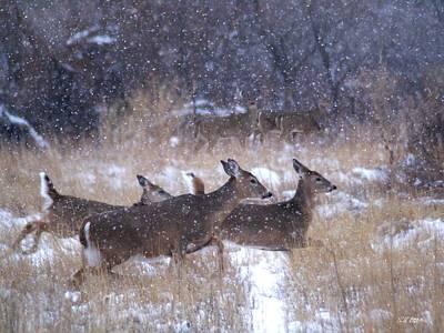 It Is Snowing Original by Bill Stephens