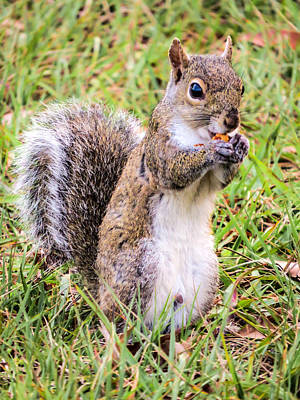 Squirrel Photograph - It Is Tasty by Zina Stromberg