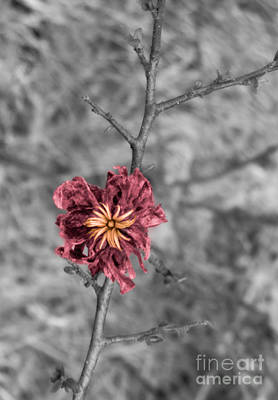 Photograph - It Still Blooms...even When Dead by Sherry Lasken