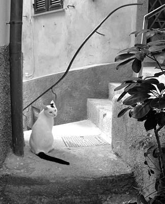 Photograph - Italian Charmer by Corinne Rhode