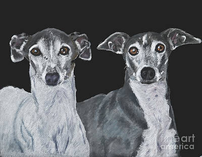 Painting - Italian Greyhounds Portrait Over Black by Kate Sumners