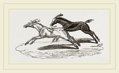 Horse Racing Drawing - Italian Horse-racing by Litz Collection