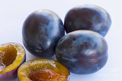 Photograph - Italian Prune Plums by Sharon Talson
