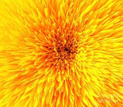 Italian Sunflower Detail Art Print by C Lythgo