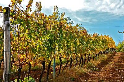 Italian Vineyard Original by Mark Prescott Crannell