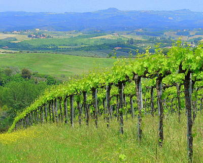 Photograph - Italian Vineyard by Ramona Johnston