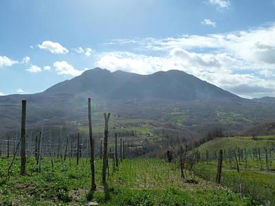 Ben Weinberg Photograph - Italy Campania - Mastroberardino Vineyard 1 Pompeii by Benjamin Weinberg