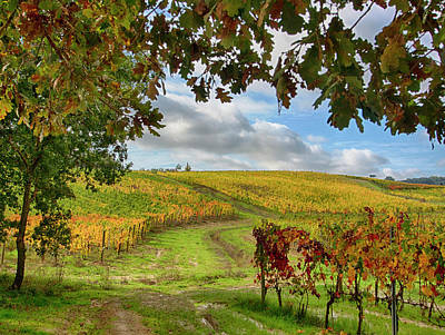 Autumn Farm Scenes Photograph - Italy, Montepulciano, Autumn Vineyards by Terry Eggers