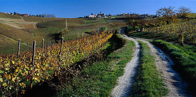 Grapevine Photograph - Italy, Piemont, Road by Panoramic Images