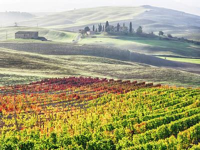 Italy, San Quirico, Autumn Vineyards Art Print