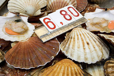 Shell Sign Photograph - Italy, Venice Fresh Scallops For Sale by Jaynes Gallery