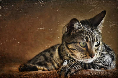 Photograph - It's A Cat's Life by Barbara Manis