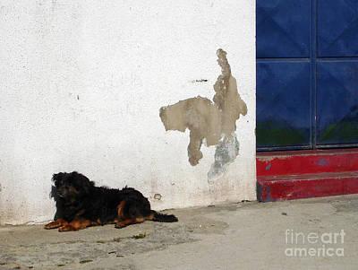 Photograph - It's A Dog's Life by Menega Sabidussi