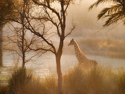 Photograph - It's A Good Morning by Barry Cole