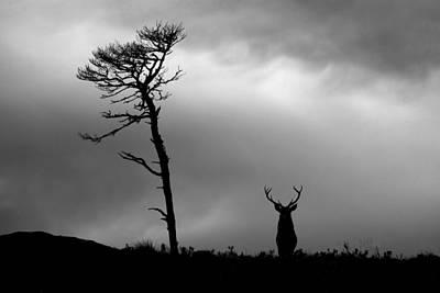 Photograph - It's A Long Winter by Gavin macrae