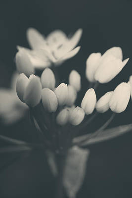 White Flowers Photograph - It's A New Life by Laurie Search