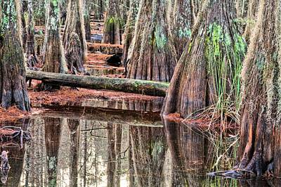 Swamp Thing Photograph - Its A Southern Thing by JC Findley