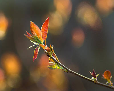 Photograph - It's A Spring Thing by Bill Pevlor