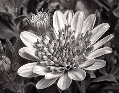 Photograph - It's All Black And White by David and Carol Kelly